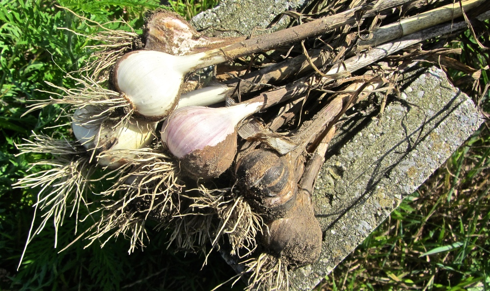 Our most recently featured vendor: The Garlic Brothers.