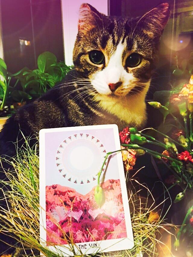 sun-card-starchild-tarot-plants-cat-kitty