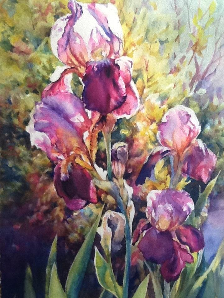 Debby's Iris