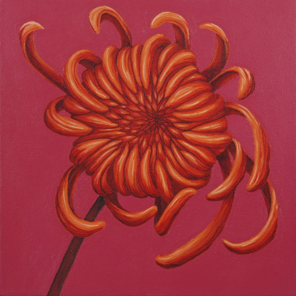 """Orange Cupcake   Love this pairing of bright, fun colors; orange and pink. The Pink Chrysanthemum and Orange Chrysanthemum paintings complement each other perfectly in form and position. A delicious duo. (acrylic painting on 12""""x12""""x1.5"""" gallery wrapped canvas)  (Pink Chrysanthemum and Orange Chrysanthemum paintings sold separately).  SOLD"""