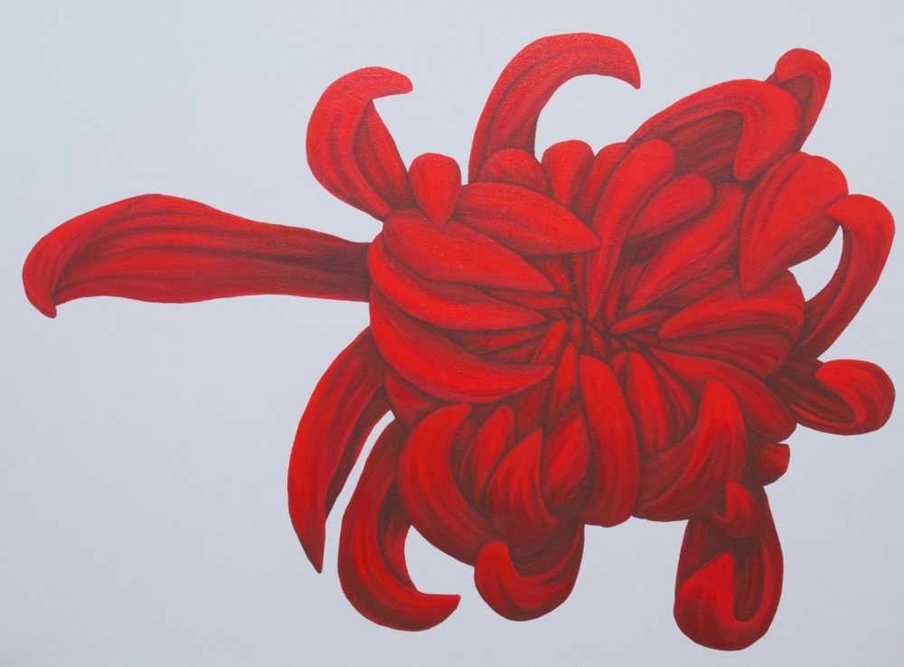 """Brazen   A vibrant chrysanthemum reaching out in a lovely red, surrounded by a calming gray. See the partner painting- Shameless.  acrylic painting on 18"""" x 24"""" x 1.5"""" gallery wrapped canvas  $1200.00"""