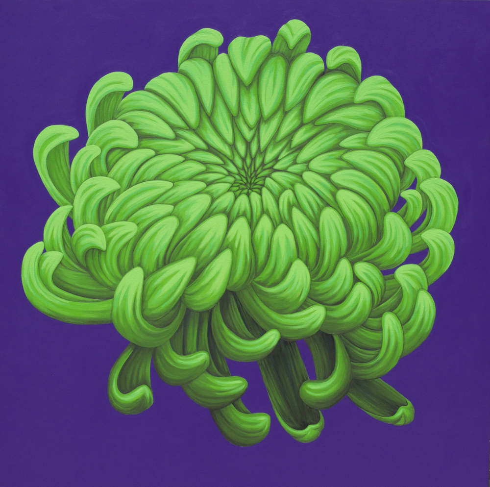 """Go Kelly Go   GoKellyGo is a vibrant combination of a bright green chrysanthemum on a deep purple background. The flower seems to float above the canvas in this mesmerizing piece. (acrylic painting on 48""""x48""""x1.5"""" gallery wrapped canvas)  $2300.00"""