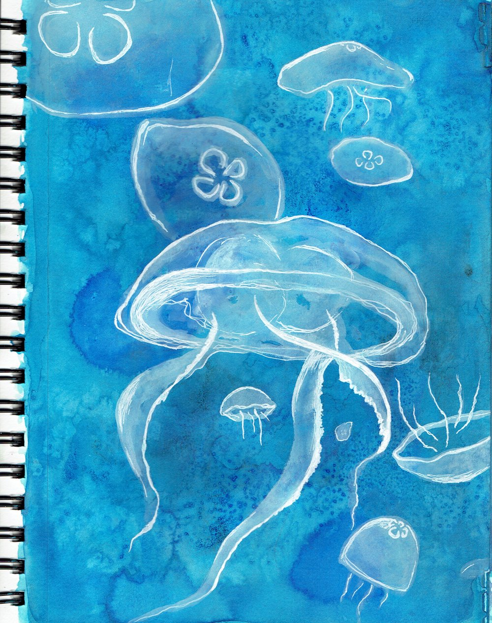 10/23: More jellyfish