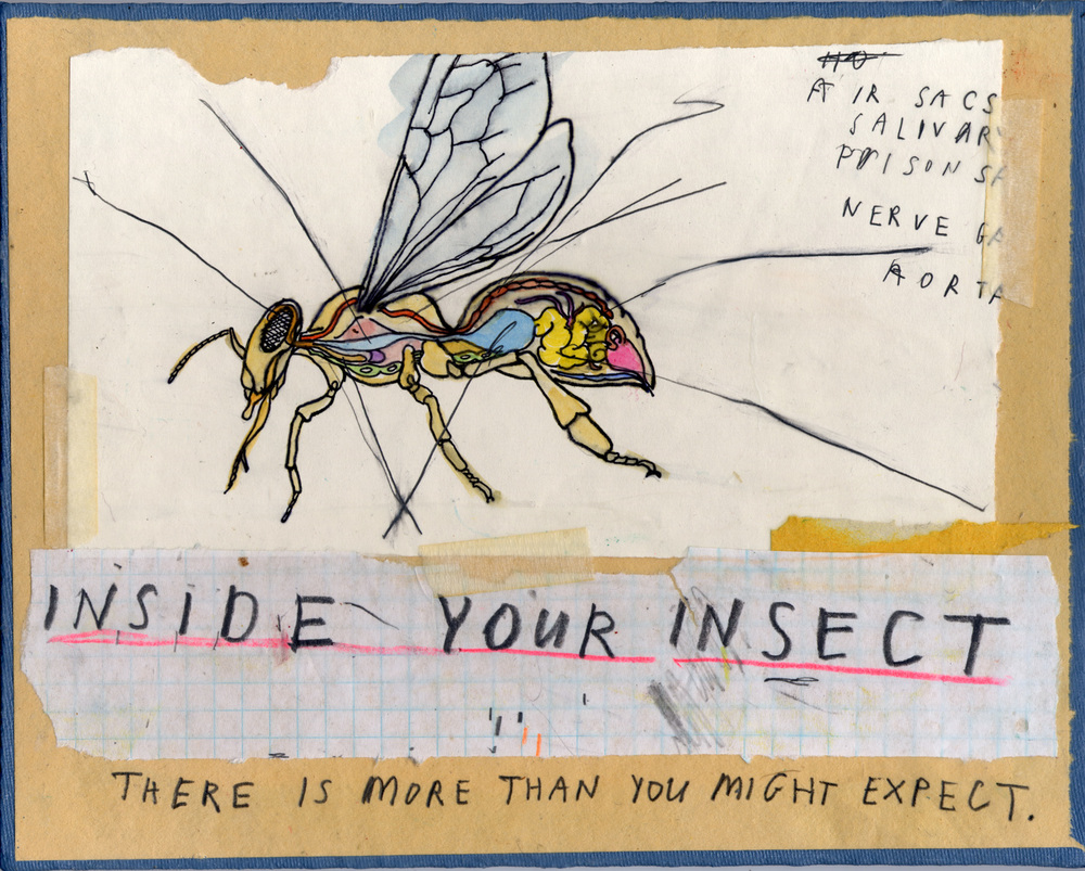Internal_Affairs_Insect_lo.jpg