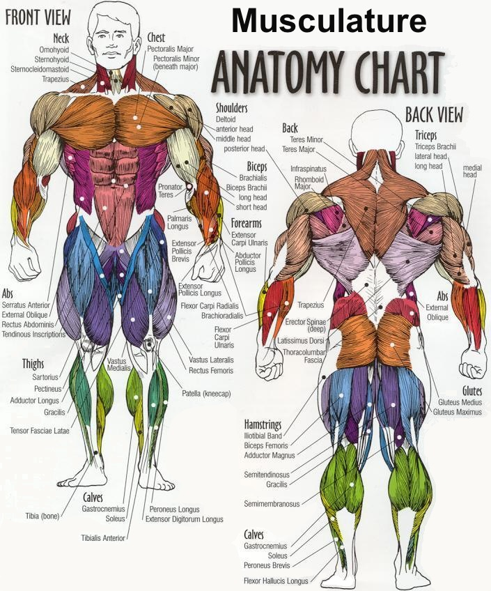 Getting Some Posterior Action (The Key To a Happy Body) - IFC ...