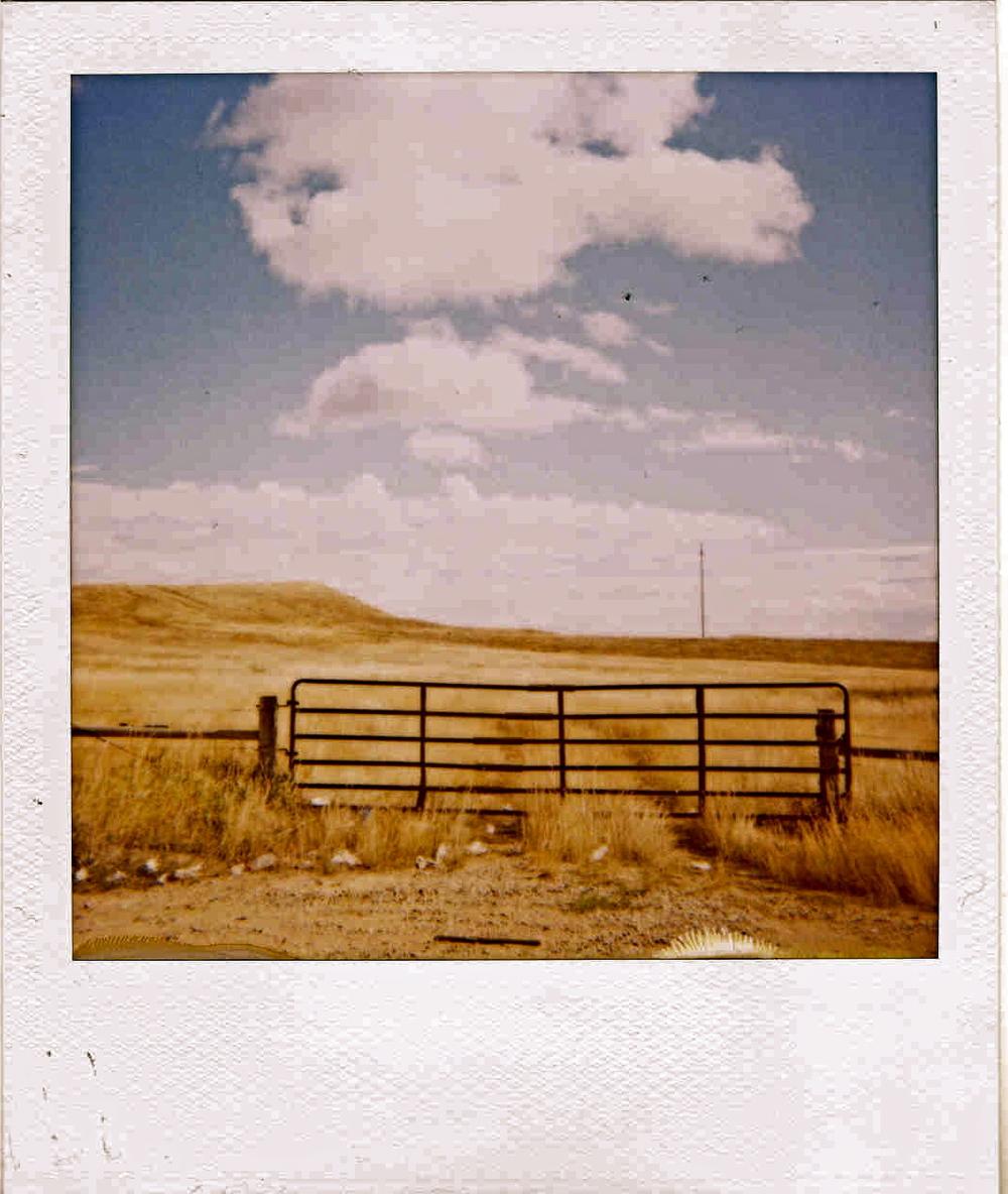 the fence.jpg