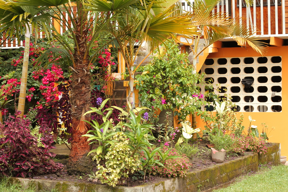View of the garden outside the front of the house.
