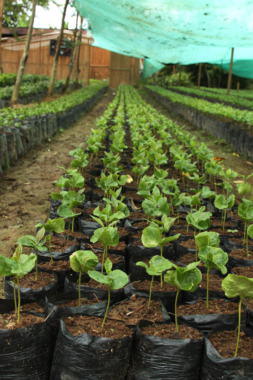 Seedlings in their individual bags.