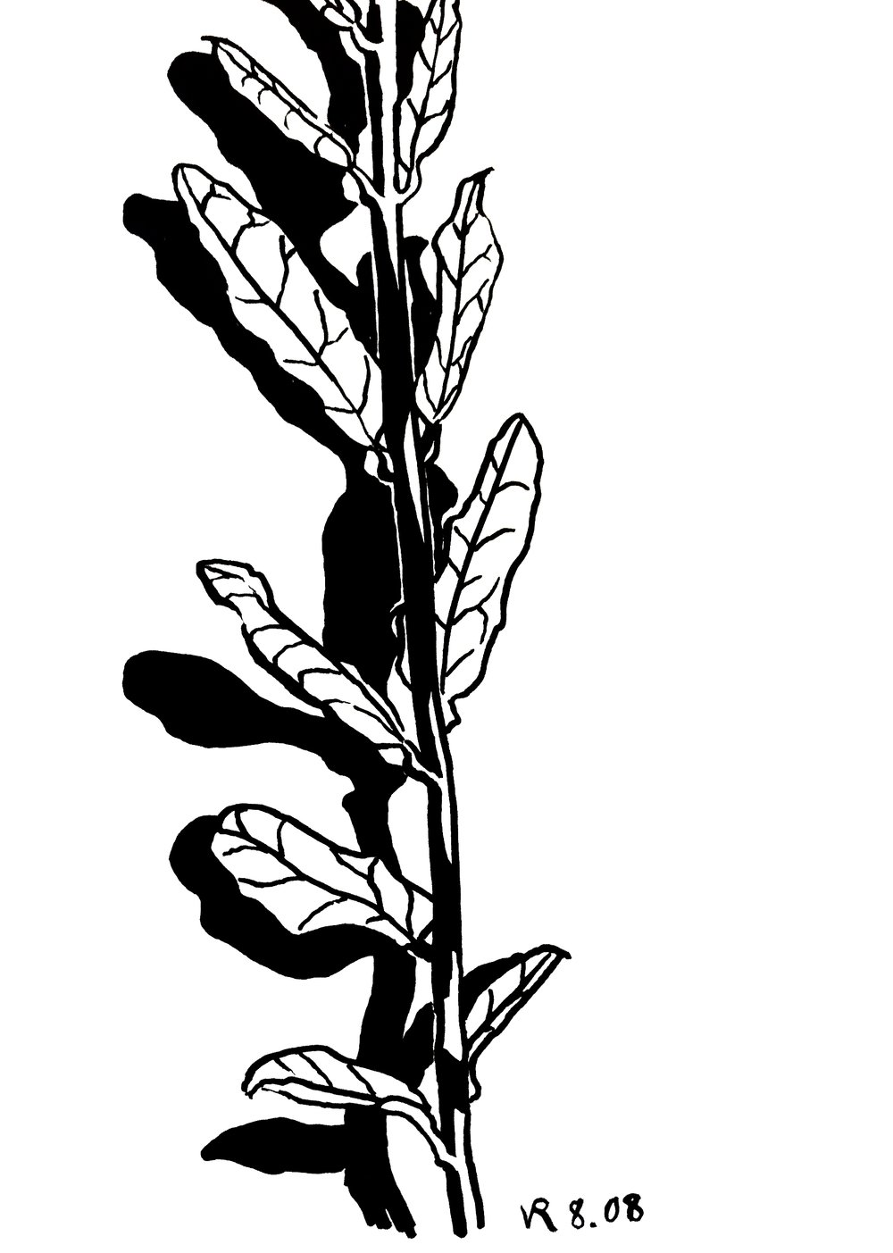 ink branch drawing.jpg