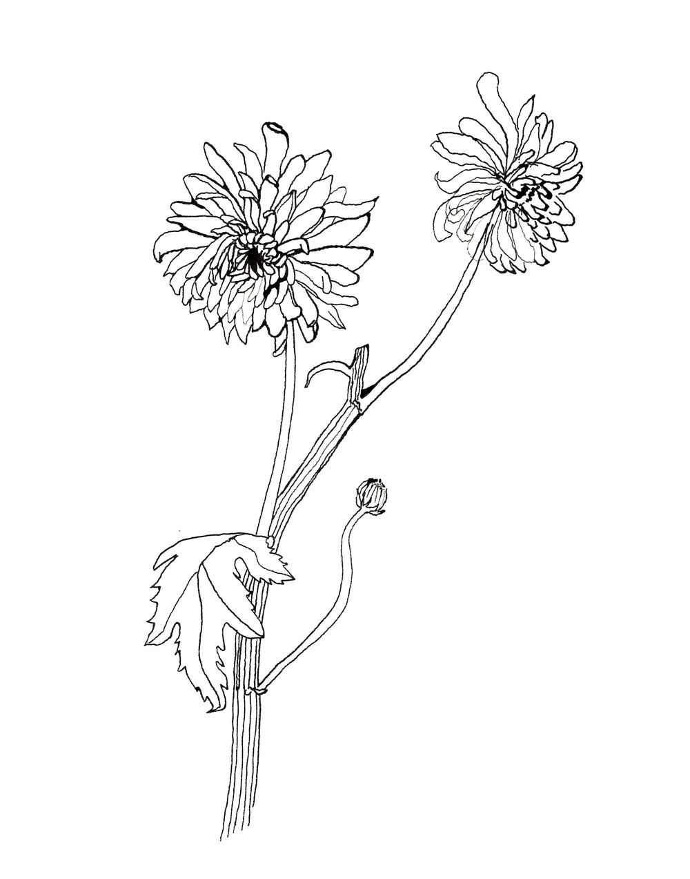 vicky_katzman_flower_line_drawing.jpg