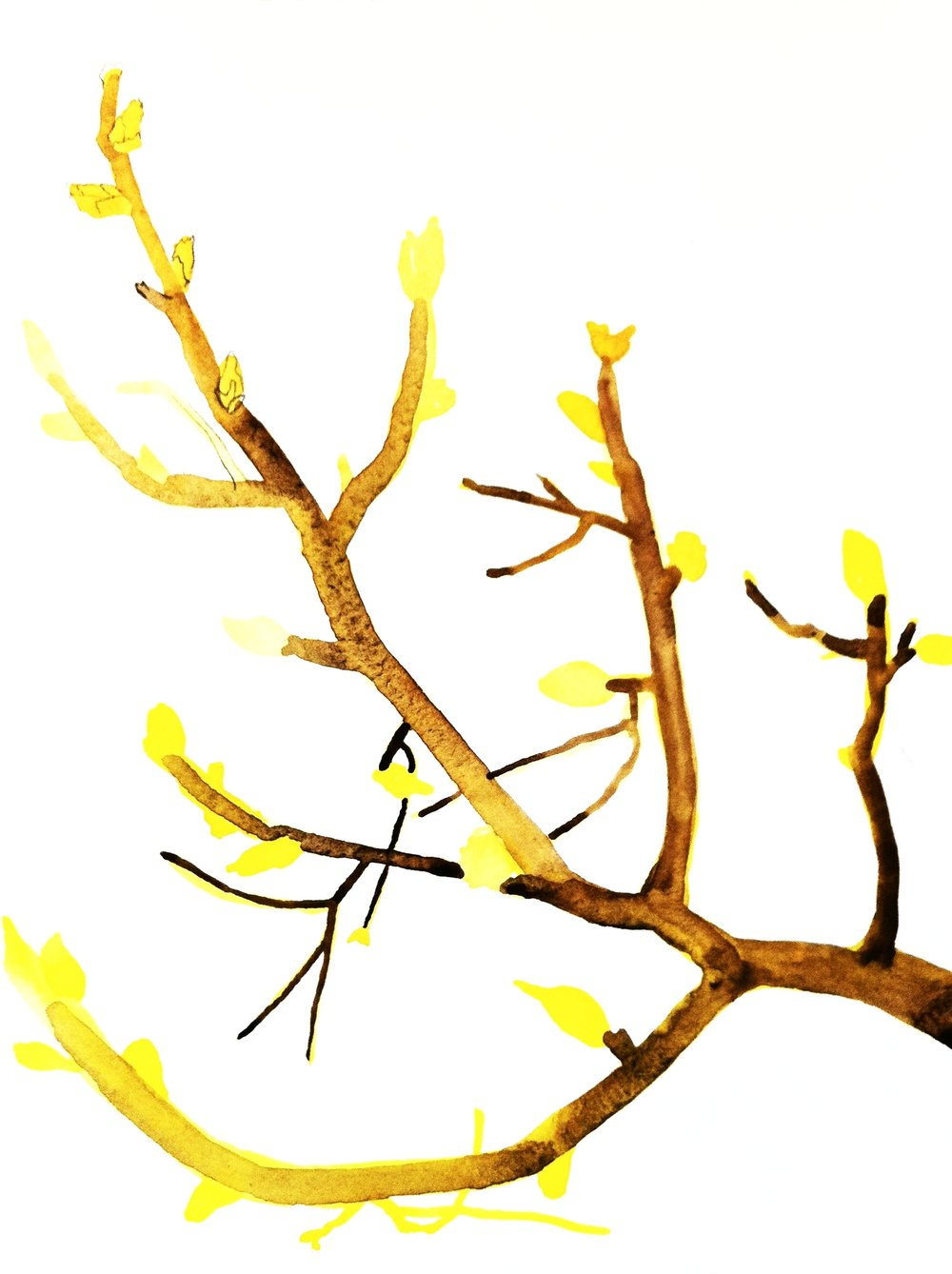 watercolor branch.jpg