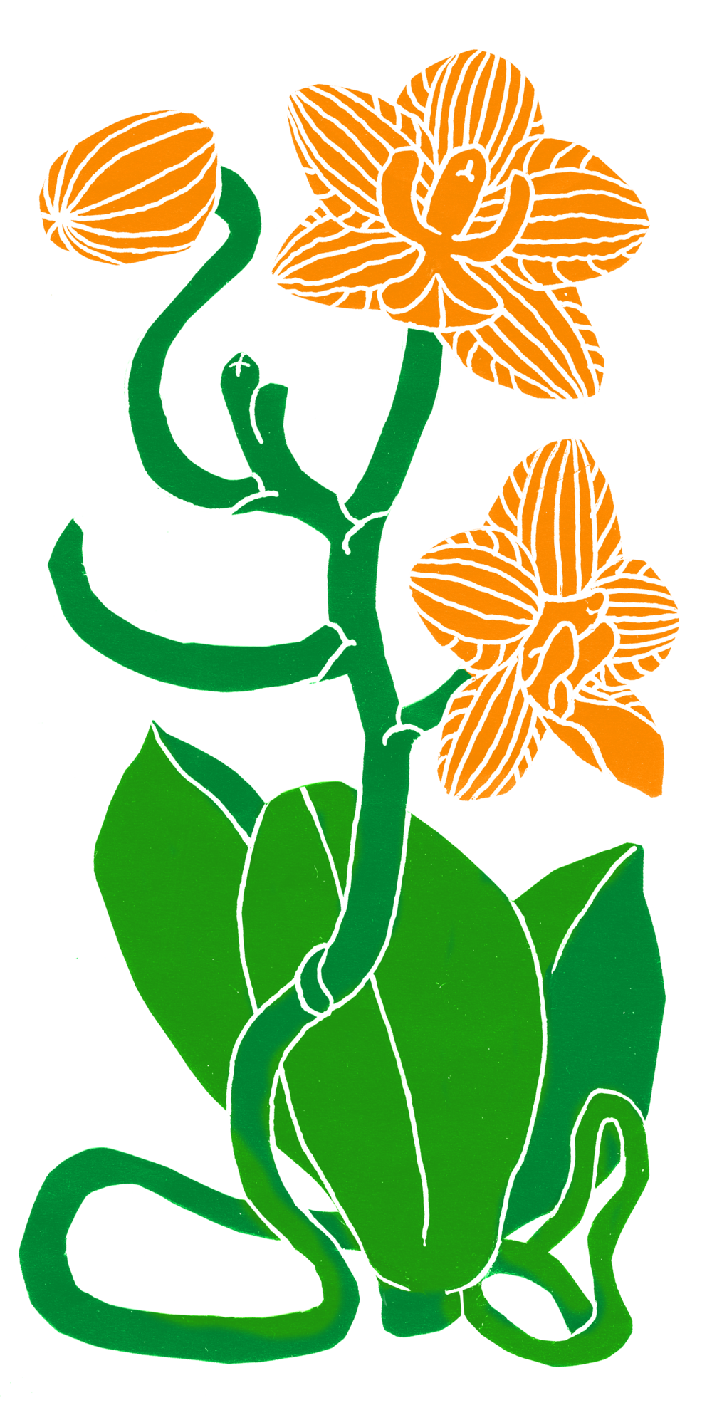 orchid plant.png