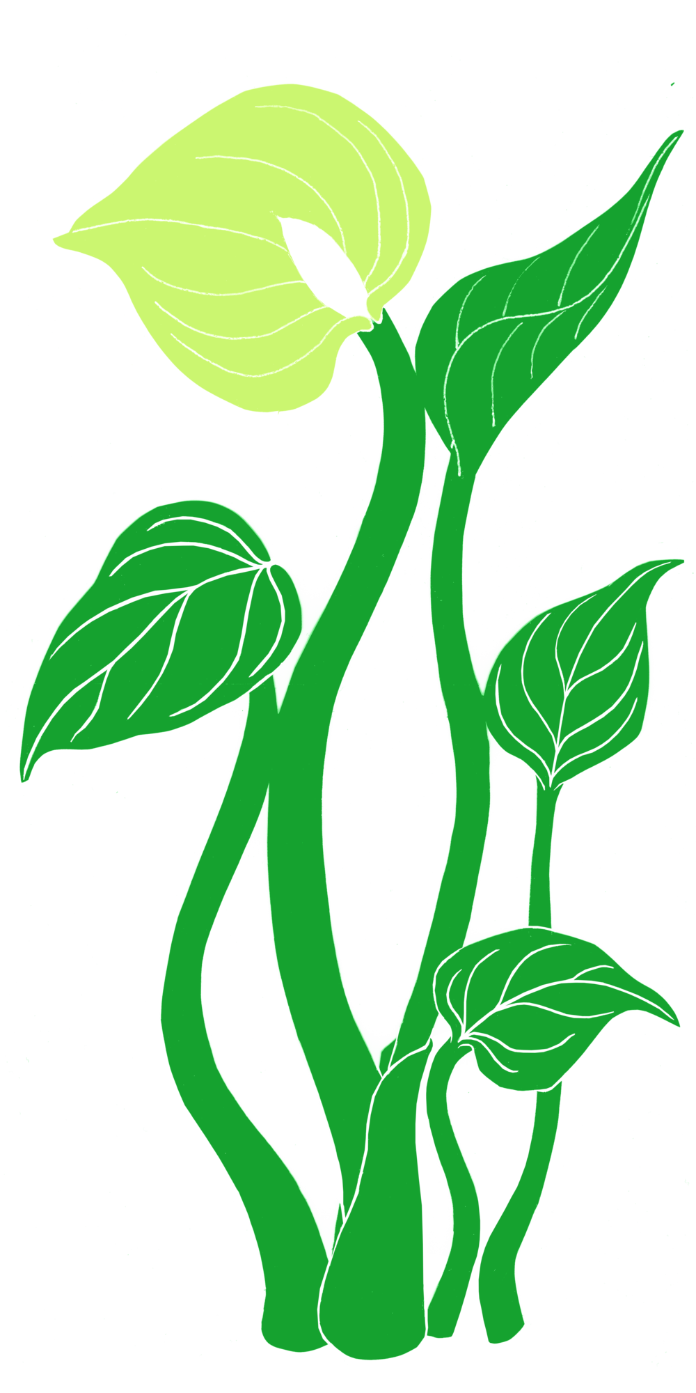 tall green plant.png