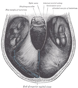 "Tentorium Cerebelli - creates a ""floor"" for the brain (cerebrum) and separates the cerebrum from the cerebellum"