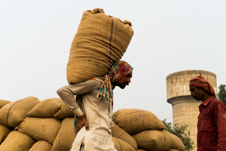 Men load 50kg sacks of rice onto a truck which will take the rice to be processed and exported from the grain market in Amritsar, Punjab, India, September 23, 2016.