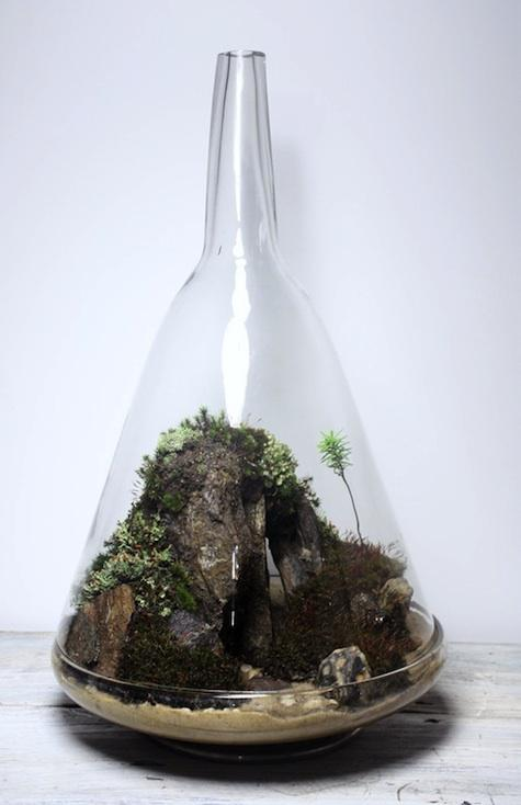 Slug and Squirrel Terrariums