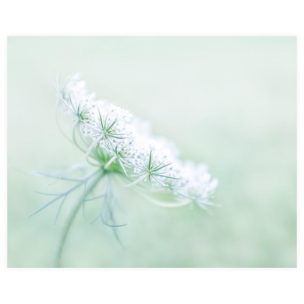 Lisa Ridgely Photography 5