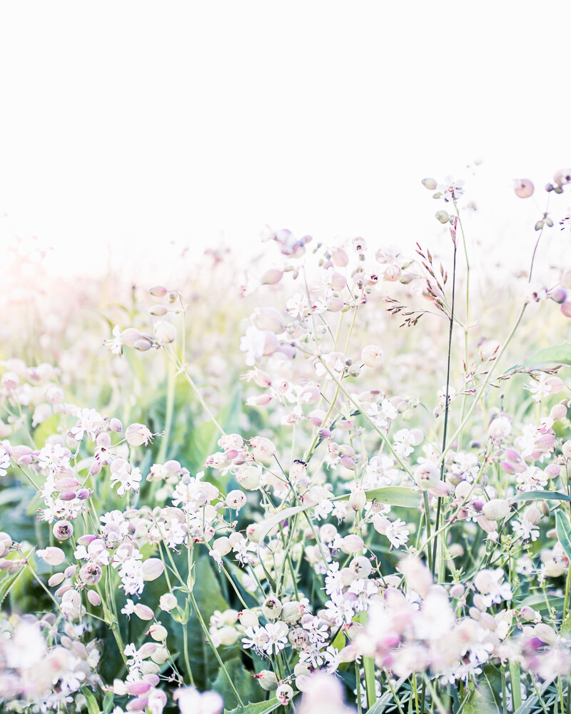 Lisa Ridgely Photography Wildflower Field Photography Print