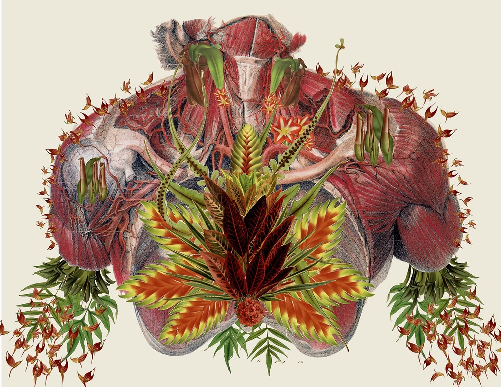 http://www.thisiscolossal.com/2014/03/anatomical-collages-by-travis-bedel/