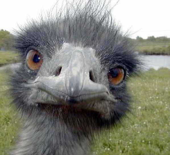 This ostrich has a Buddha smile. Can you see it??