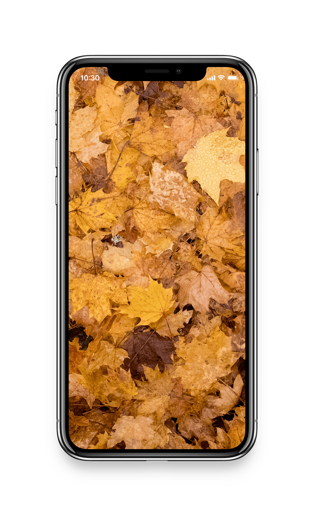 iPhone X - Mockupfall.png