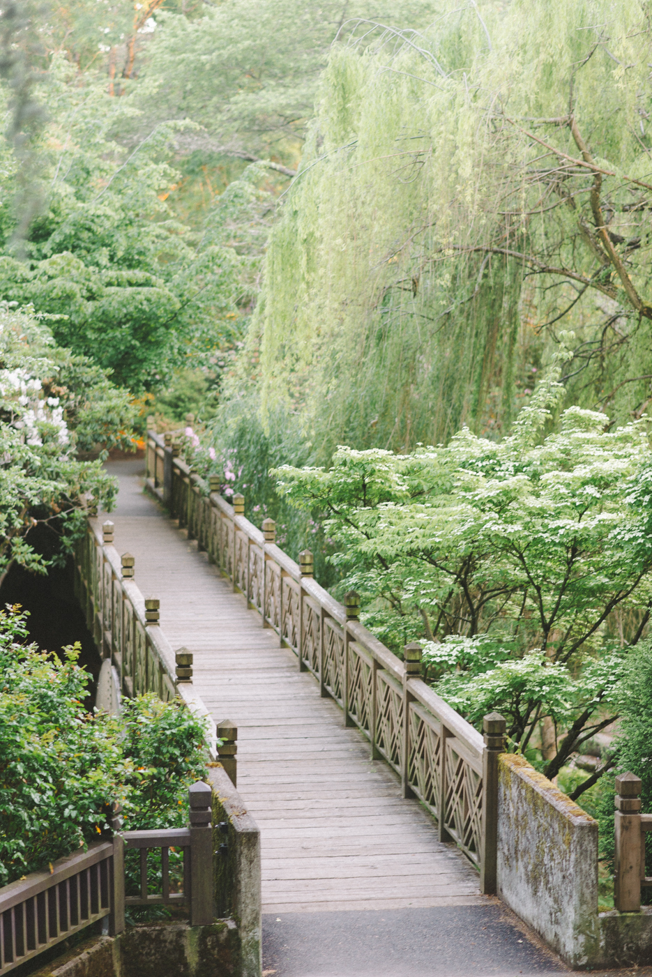 Crystal Springs Rhododendron Garden Portraits Bridge Portland Oregon.