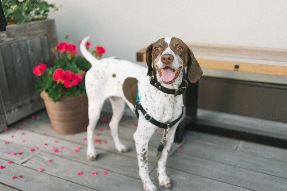 ecotrust-building-wedding-reception-puppy-pet-portland-oregon-shelley-marie-photo