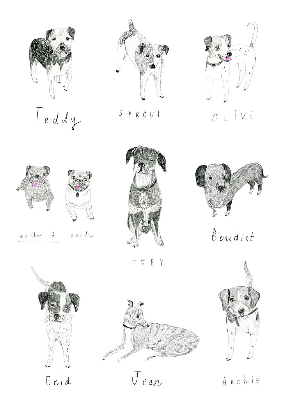 dogs_boden.jpg