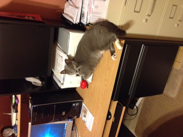 Ah cats and their love of taking over our workspace. If you're not a cat owner you don't understand just how common this is for felines. It's like they know we need to work and aren't having any of it. To see what Allie has created with Hannah along for the ride, click the kitty and you'll be transported to her Amazon page.