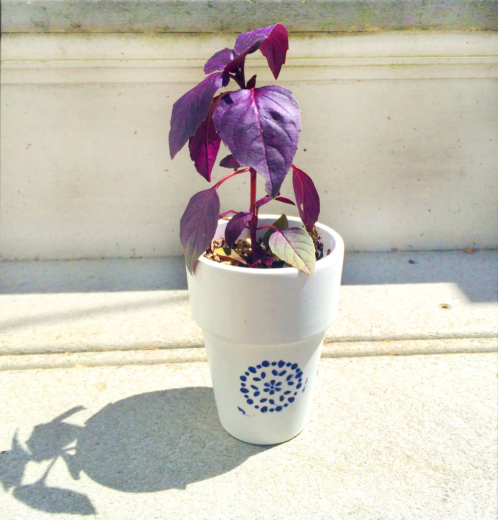 Purple basil from my cousins wedding this weekend, they used the plants as name cards, such a cute idea!