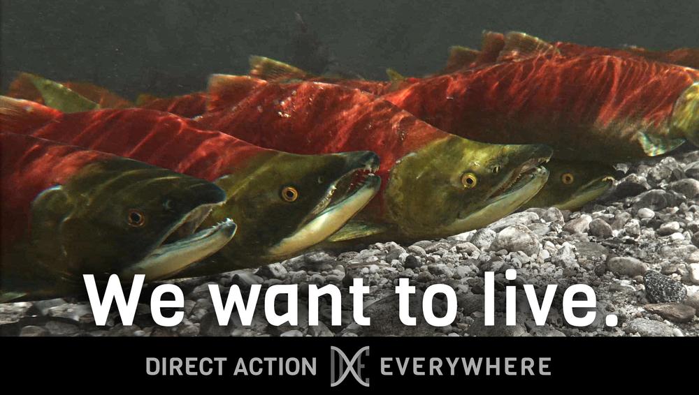 iwanttolive_salmon.jpg
