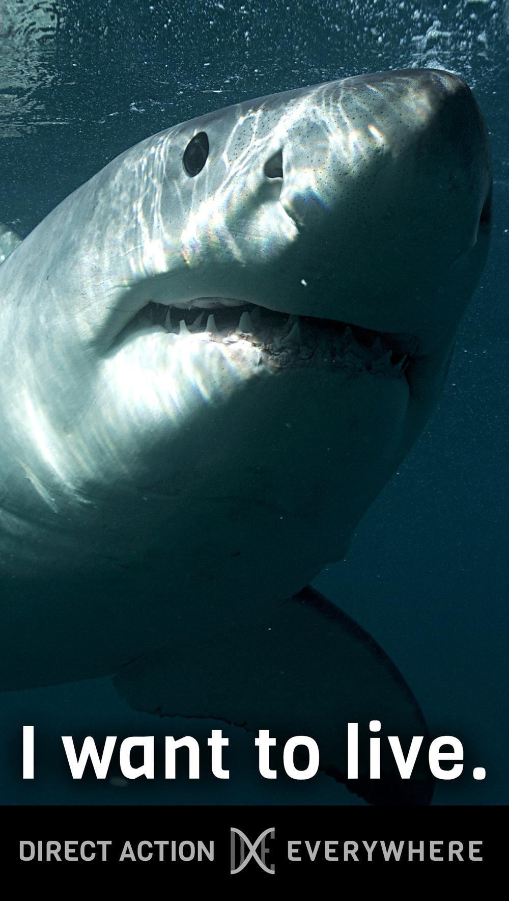 iwanttolive_shark.jpg