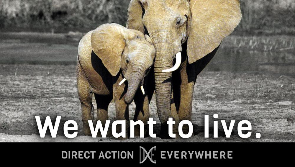iwanttolive_elephants.jpg