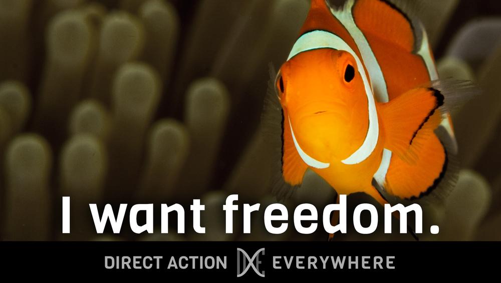iwantfreedom_clownfish.jpg