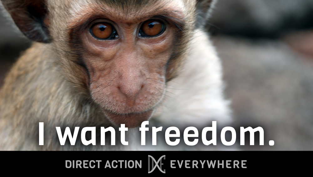 iwantfreedom_monkey2.jpg