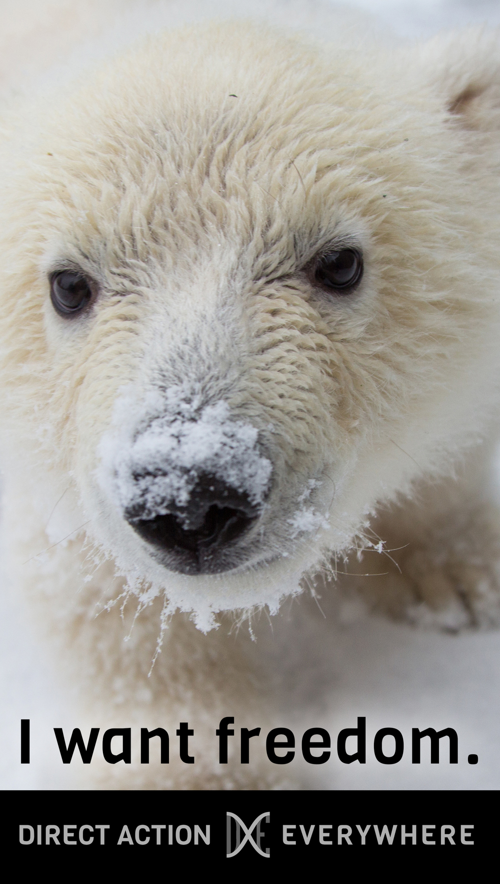 iwantfreedom_polarbearcub.jpg