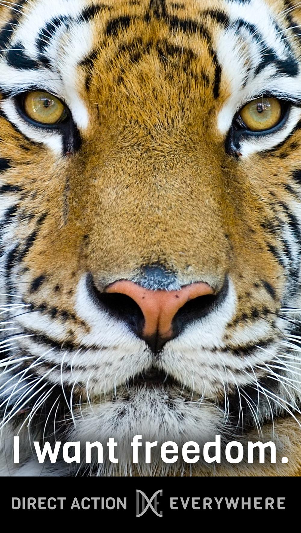 iwantfreedom_tiger.jpg