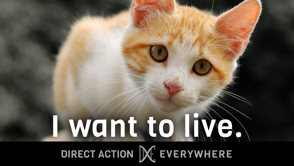 iwanttolive_kitten.jpg
