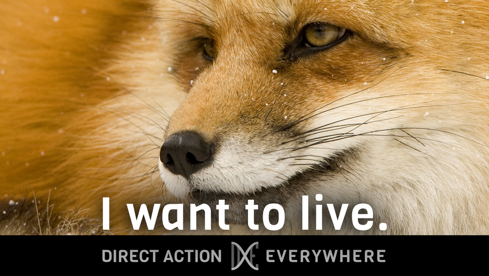 iwanttolive_fox.jpg
