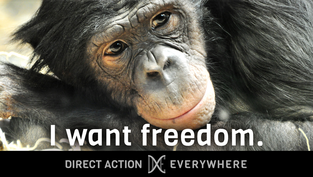 iwantfreedom_chimp2horizontal.jpg
