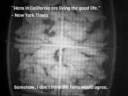 "California's Prop 2 in action. According to the New York Times, the hens are "" living the good life ."""