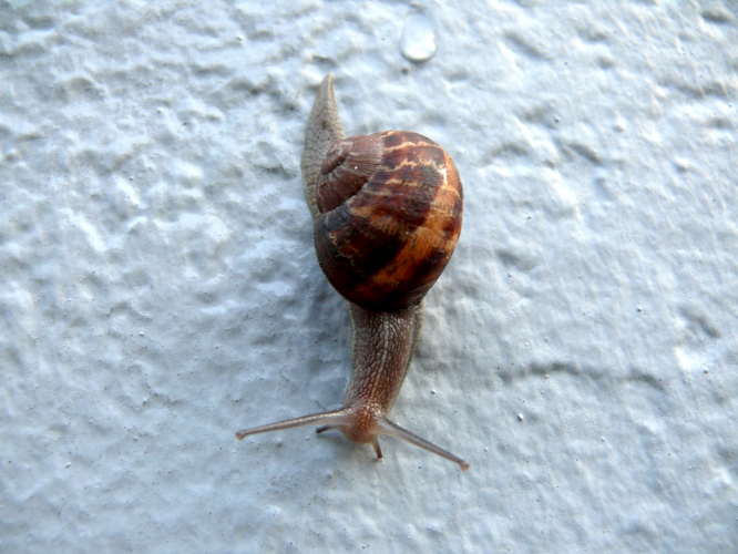 Snail— unknown name and gender. Many snails are hermaphrodites, making the pronoun decision a bit more complicated.
