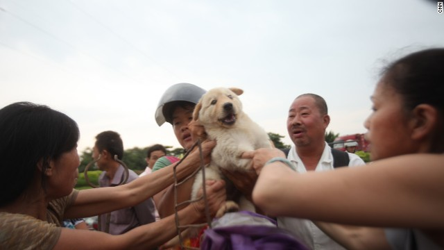 One of the thousands of dogs rescued from slaughter by grassroots activists in China.