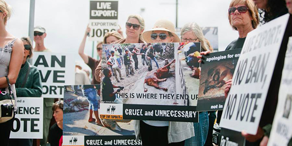 Demonstration against live export.