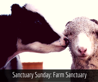 Sunday, January 24 - 6:30 AM Volunteering + potluck. Email to RSVP, 15 people max Farm Sanctuary, Orland