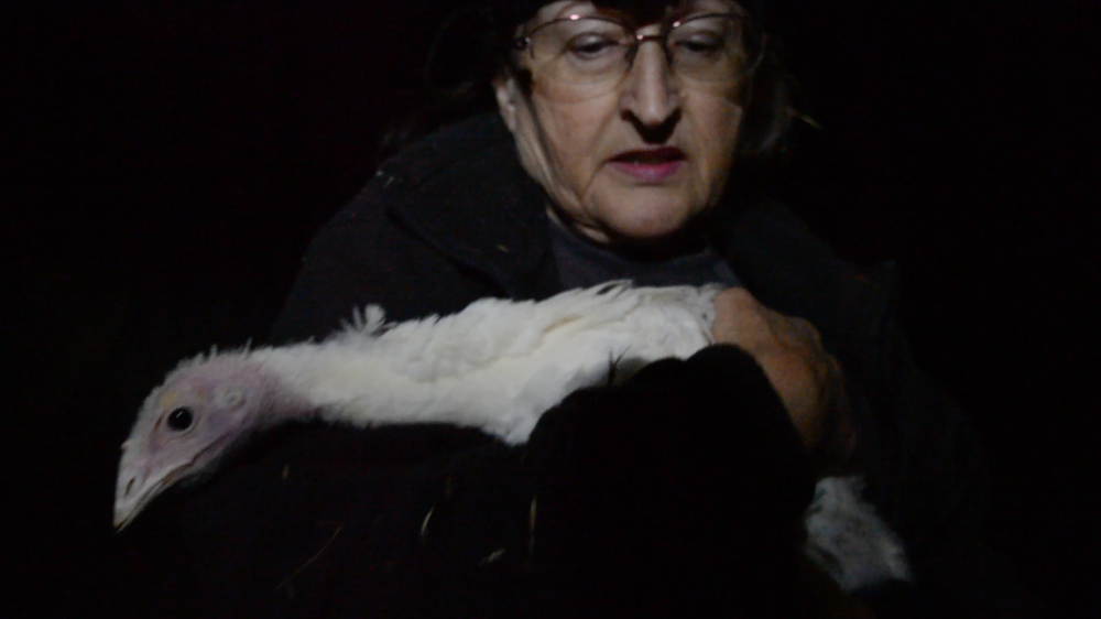 Rescuer Diane Sorbi with Helen, a hen rescued from Diestel Turkey Ranch.
