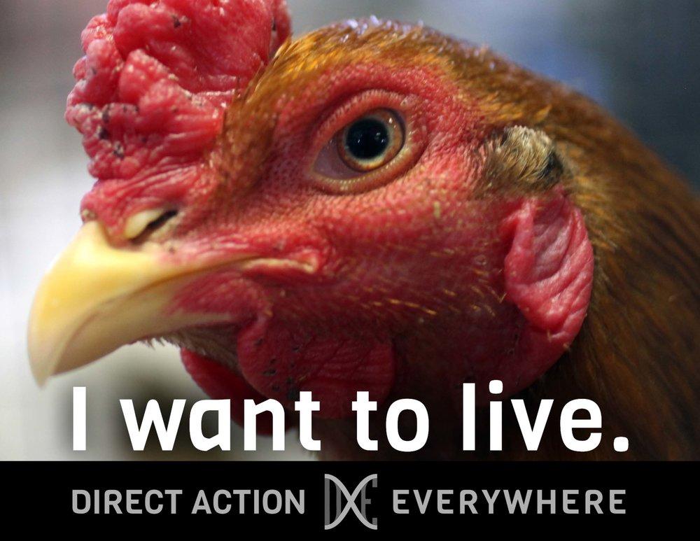iwanttolive_chicken.jpg