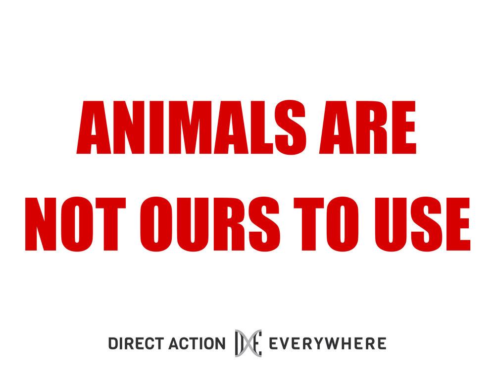 AnimalsAreNotOurs_letter.jpg