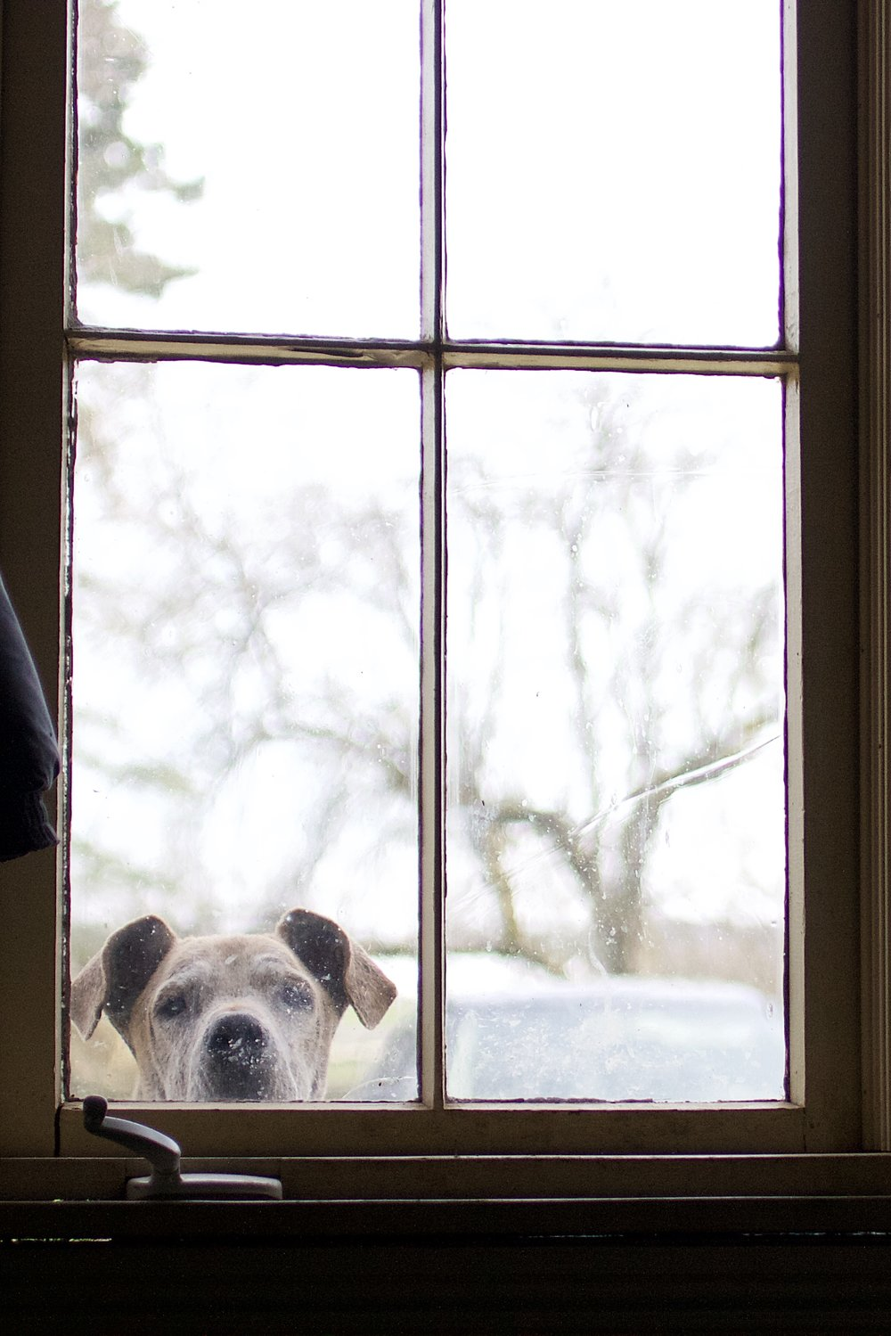 Every family has a weird nosy uncle. At Madison's newly adopted family - it's Buster the dog.