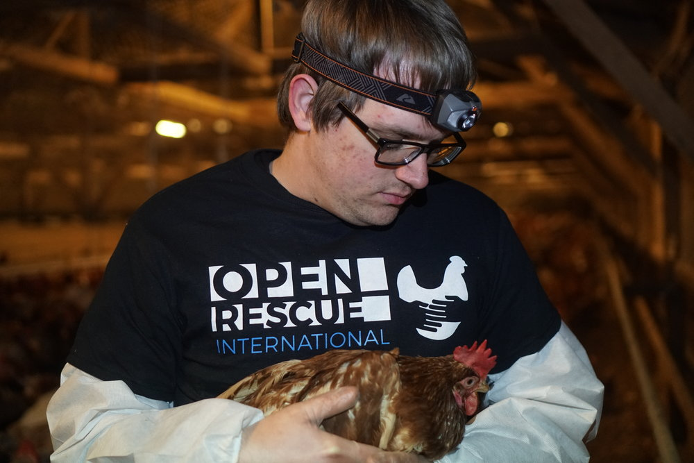 DxE activist Jake Hobbs holds Chloe inside the farm